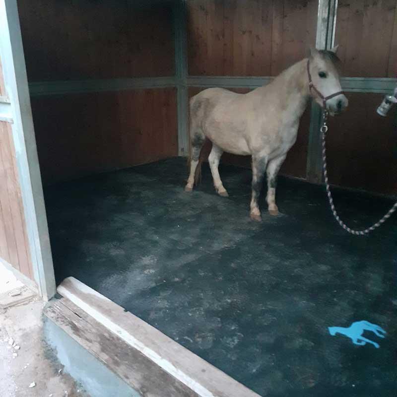 Soft Farm- Stalla (Casamassima)